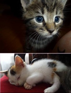 Dexter (top) was handled a lot as a kitten, whereas Juno (bottom) wasn't used to humans.